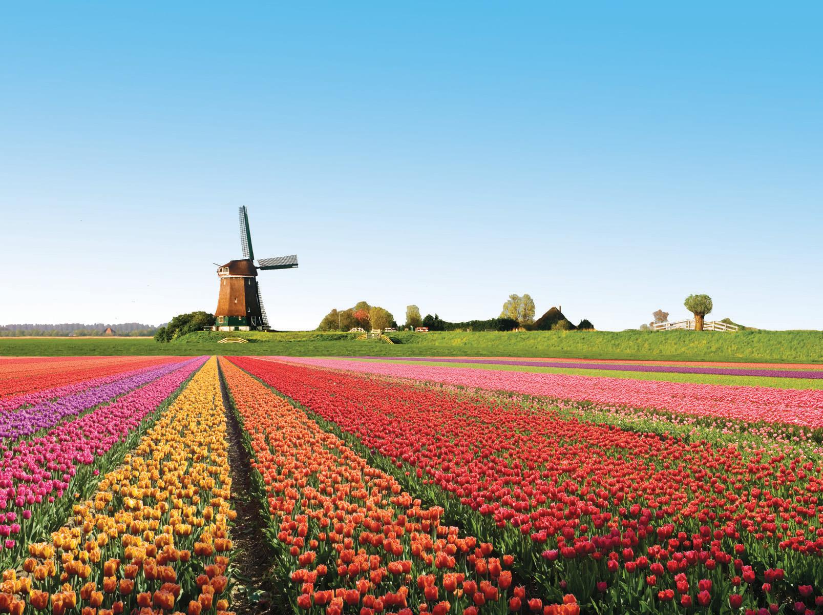 學習玻璃之城的包容心 -荷蘭工作談